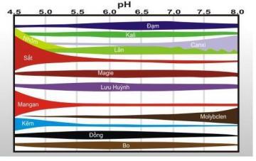 Vai trò của pH đất và cây trồng