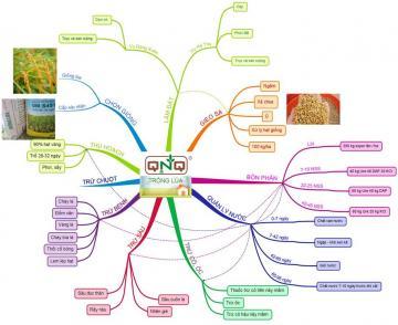 Vai trò của canh tác hữu cơ đối với sự phát triển bền vững của cây lúa