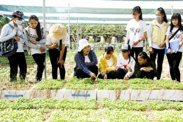 Giúp nông dân trồng rau hữu cơ