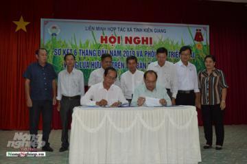 Hợp tác triển khai vùng lúa hữu cơ tại Kiên Giang