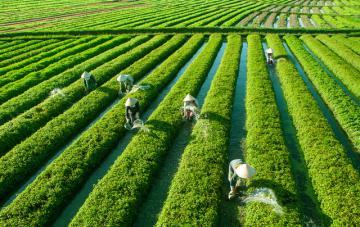 Chê cười công ty Nhật Bản mua đất rồi bỏ hoang tới 5 năm, sau này tất cả phải ngả mũ thán phục với tư duy kiếm tiền của người Nhật