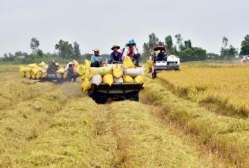 Kiên Giang: Nâng chất lúa, hồ tiêu bằng canh tác hữu cơ