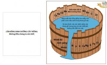 Cung cấp dinh dưỡng - Nguyên lý cái thùng gỗ