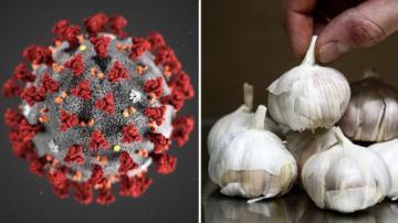 Điều tra khả năng kháng SARS-CoV-2 của các hợp chất trong tinh dầu tỏi