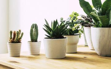 Chọn đúng loại cây cảnh hợp mệnh với từng con giáp: Cuối năm trồng trong nhà để mang lại nhiều may mắn và tài lộc
