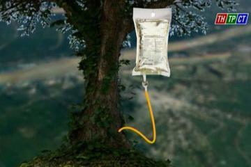 Có thể chăm cây bằng phương pháp truyền dịch?