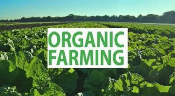 Hệ sinh thái nông nghiệp hữu cơ