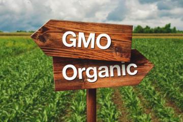 Quy định giống biến đổi gen (GMO) trong canh tác hữu cơ
