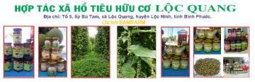 Bình Phước - Tiêu hữu cơ Lộc Quang